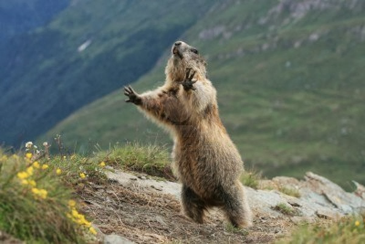 Marmot Logo photo - 1